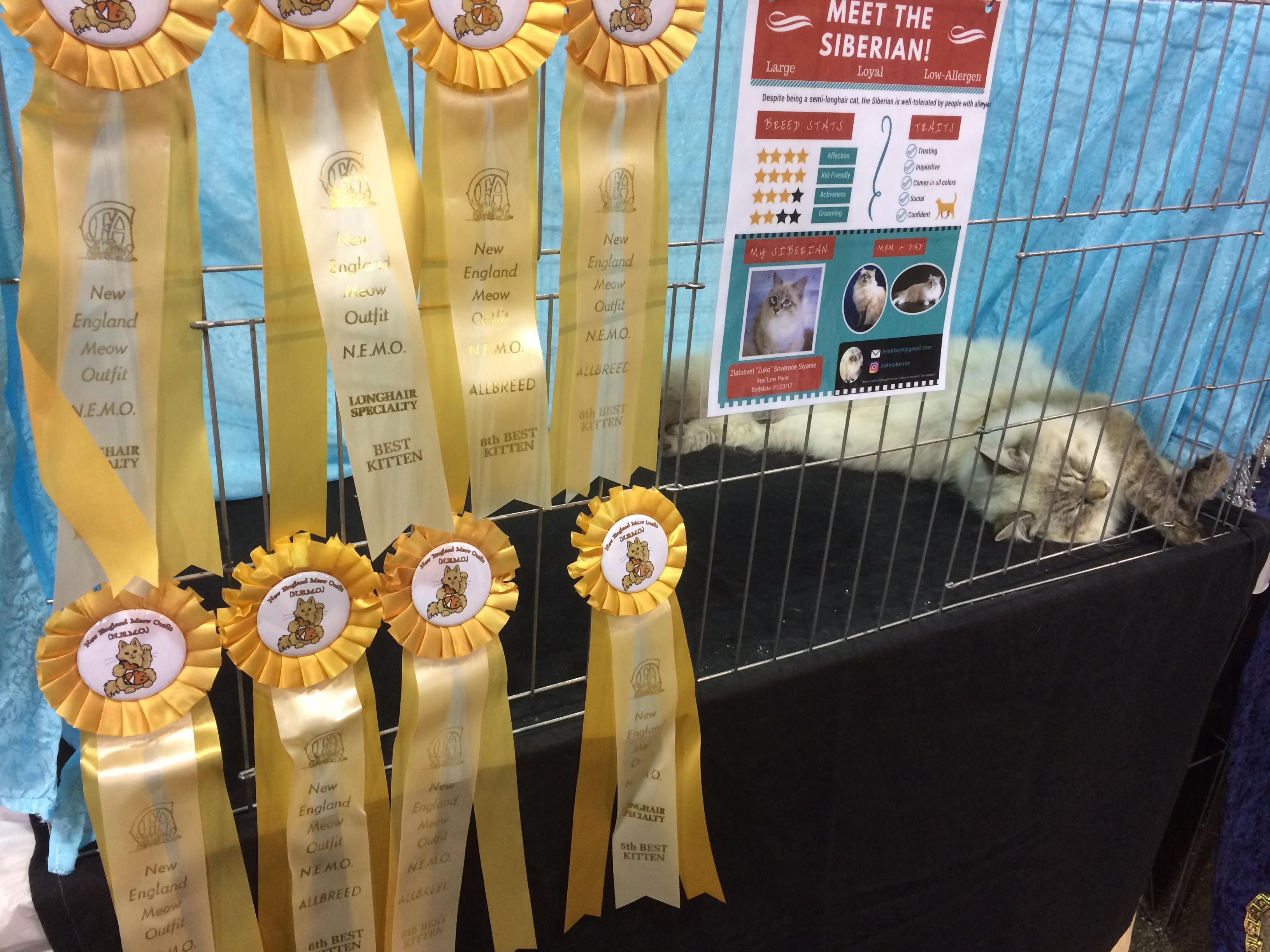 Cat show ribbons
