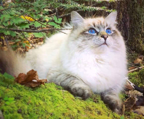 cropped-forest-cat-new_fotor-e15239021061111.jpg